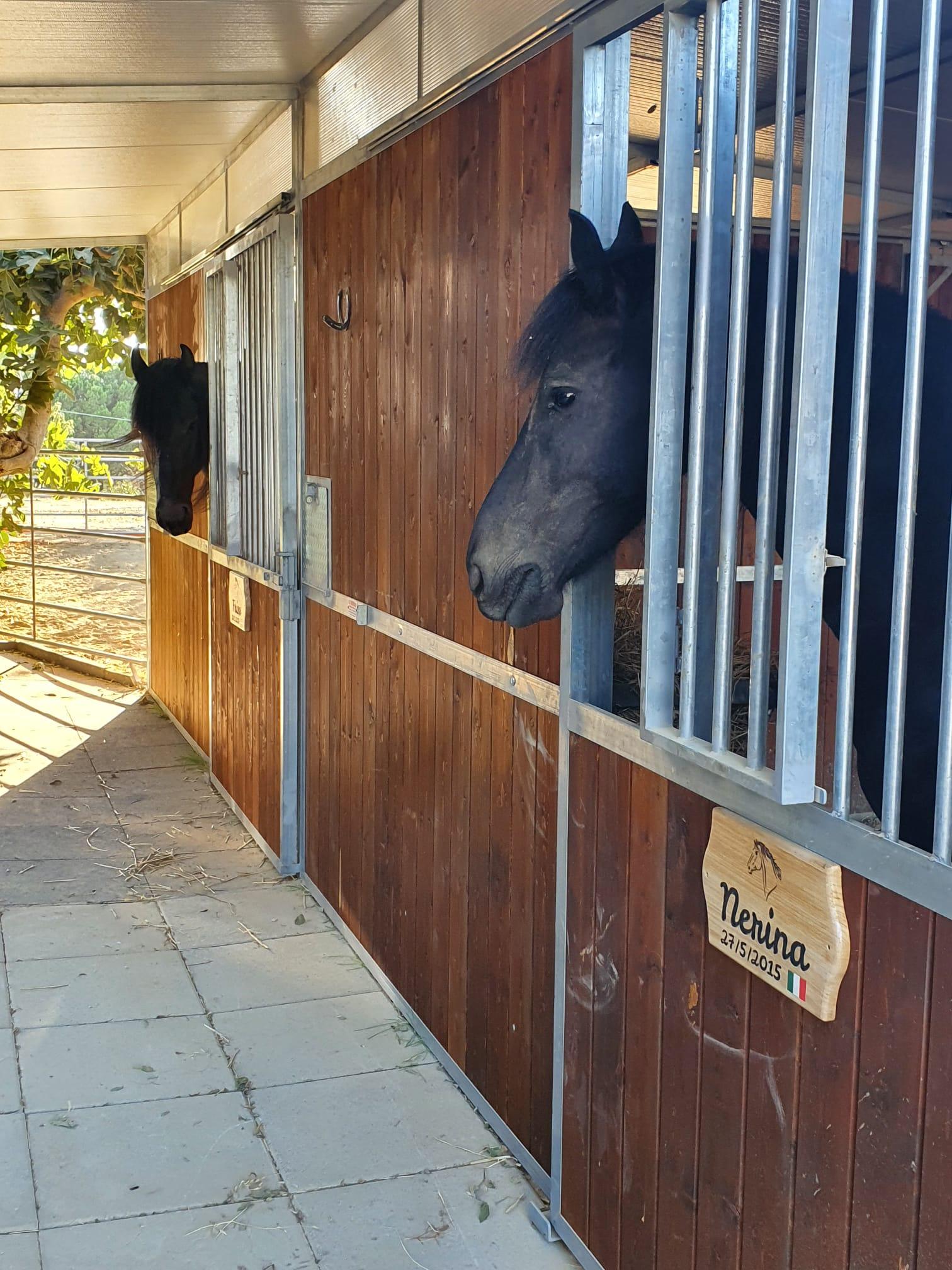 Targa Box Cavallo Maneggio Nerina & Friso
