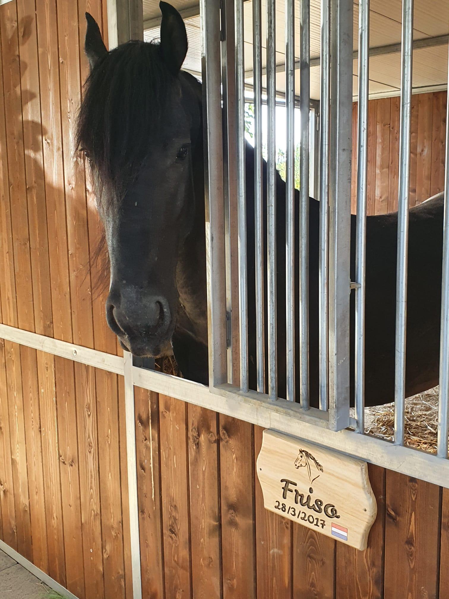 Targa Box Cavallo Maneggio Friso