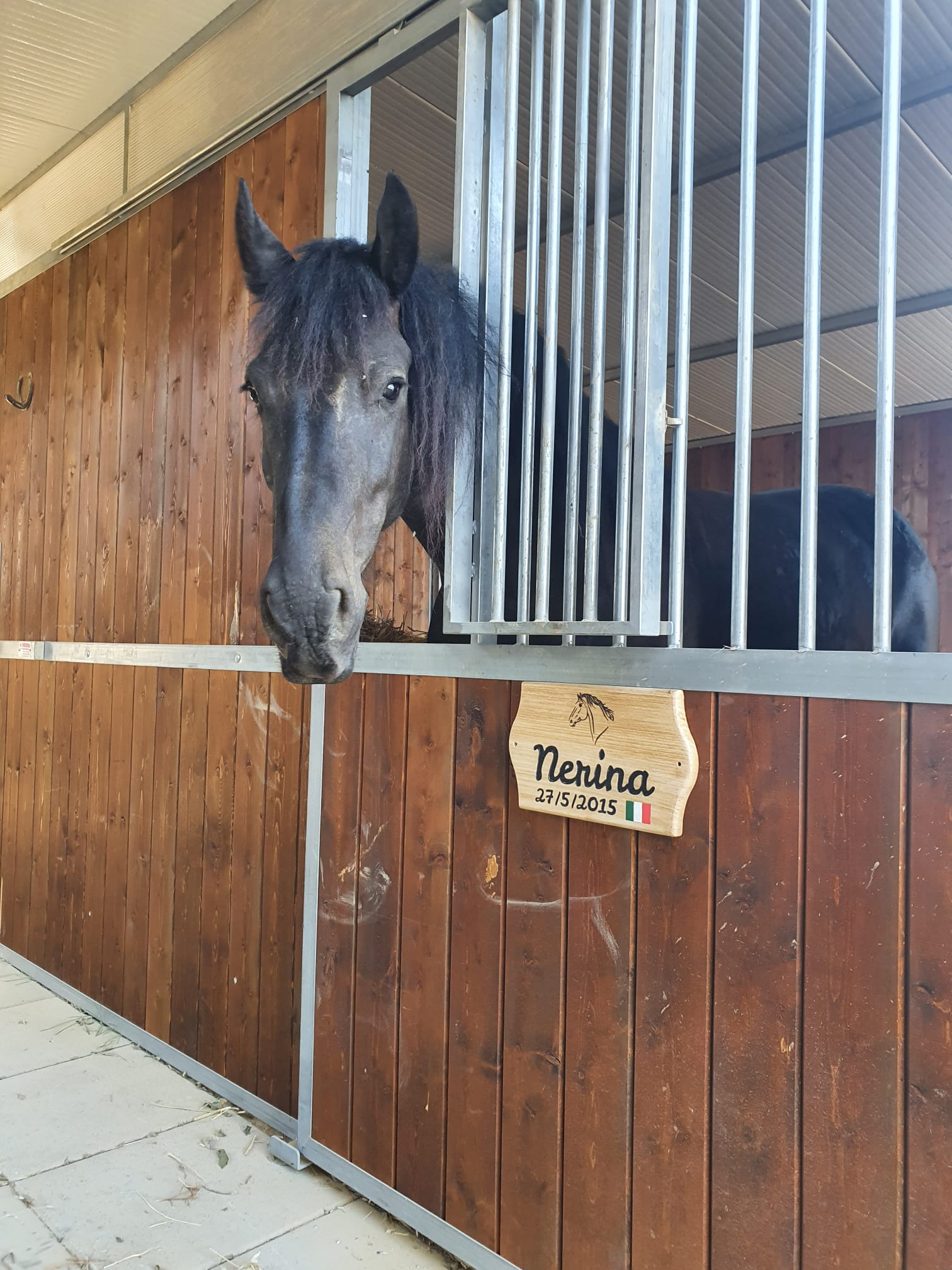 Targa Box Cavallo Maneggio Nerina